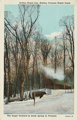 Sugar Orchard in Early Spring Vermont VT Postcard White Border Teich
