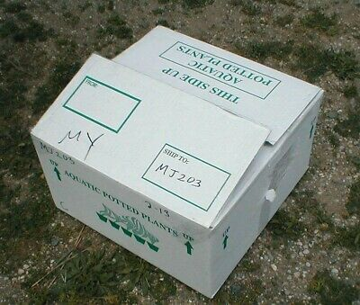 Large Insulated Shipping Carton