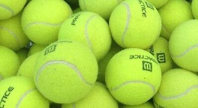 30 Used Tennis balls dog toys, crafts, projects...FREE SHIPPING.
