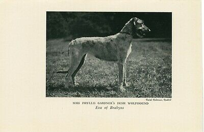 small image on every page by Starprint Irish Wolfhound Dog Notebook//Notepad