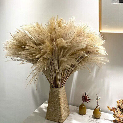 Details about  /50//100X Natural Dried Small Pampas Grass Phragmites Artificial Plants Decors UK