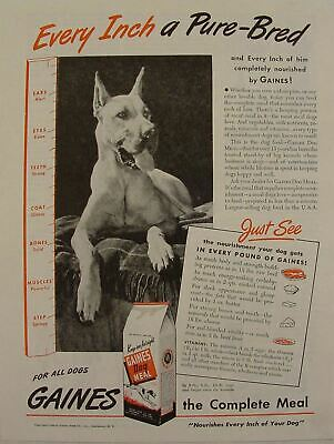 "1944 GREAT DANE in Gaines Dog Food ""Every Inch A Pure-Bred""  Print Ad"