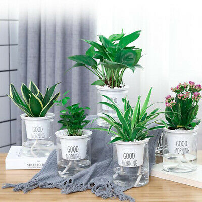 2pcs Self Watering Pot Planter For Indoor And Outdoor Plants Flowers Herbs Clear