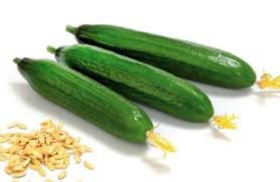 Free shipping 1//4 oz Persian cucumber seeds approx 200 seeds