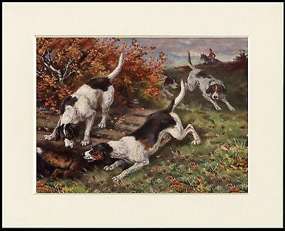 Foxhound Lovely Little Dog Print Hunting Mounted Ready To Frame