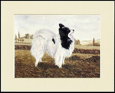 Papillon Lovely Little Dog Print Standing Dog Mounted Ready To Frame