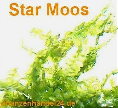 3 Portionen Star Moos, Starmoos, Aquarium, Moose