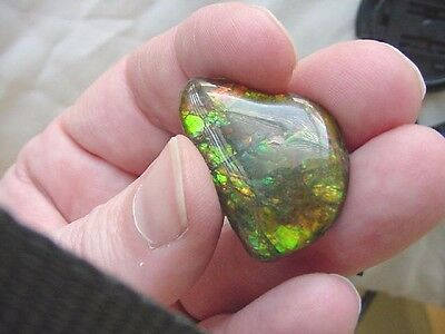 (J-482) Green with orange teardrop Ammolite fossil shell loose cabochon nautilus
