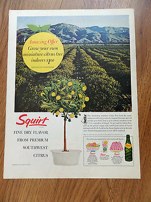 1963 Squirt Soda Ad Grow your own Citrus Tree Indoors