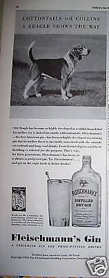 1940 Fleischmann's Gin Beagle Dog Shows the Way Ad