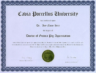 Doctor Guinea Pig Appreciation Novelty Diploma Gag Gift