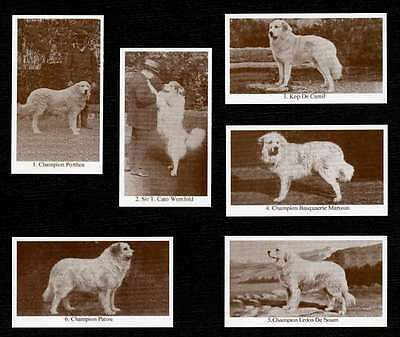 PYRENEAN MOUNTAIN DOG DOGS OF YESTERYEAR SET OF 6 NAMED DOG PHOTO TRADE CARDS