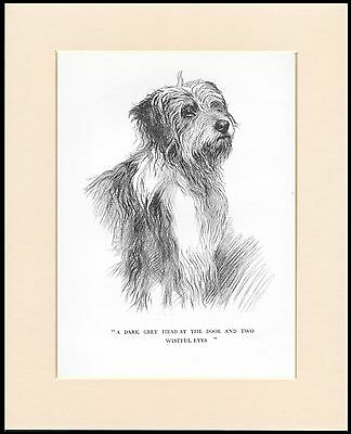 Bearded Collie Head Study Great Dog Sketch Print Mounted Ready To Frame