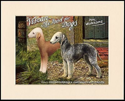 Bedlington Terrier Lovely Dog Food Advert Print Mounted Ready To Frame