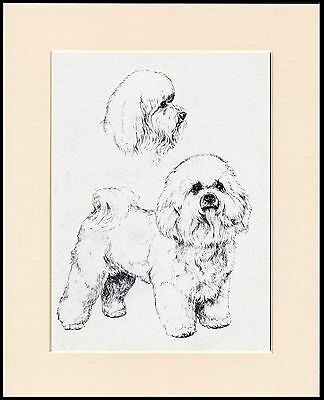 Bichon Frise Lovely Little Dog Sketch Print Mounted Ready To Frame