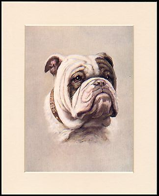 ENGLISH BULLDOG CHAMPION BOSWORTH QUEEN PATRIOTIC DOG PRINT READY MOUNTED