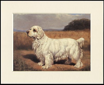 Clumber Spaniel Classically Posed Dog Lovely Print Mounted Ready To Frame