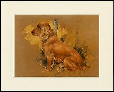 Cocker Spaniel Seated Dog Lovely Little Print Mounted Ready To Frame