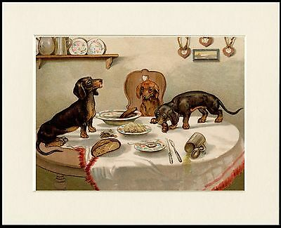 DACHSHUND NAUGHTY DOGS AND LADIES CORSET LOVELY DOG PRINT MOUNTED READY TO FRAME