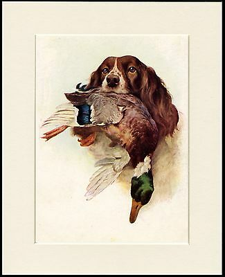 English Springer Spaniel And Duck Dog Print Mounted Ready To Frame