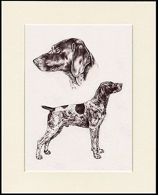 German Shorthaired Pointer Great Dog Sketch Print Mounted Ready To Frame