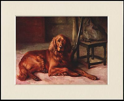 Irish Setter Dog Waits By Masters Gun Lovely Print Mounted Ready To Frame