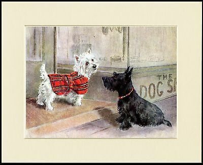 Westie Scottish Terrier Outside Shop Charming Mounted Dog Print Ready To Frame