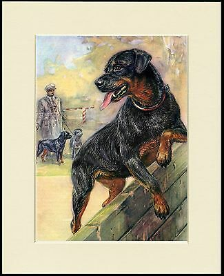 Rottweiler Lovely Dog Print Mounted Ready To Frame