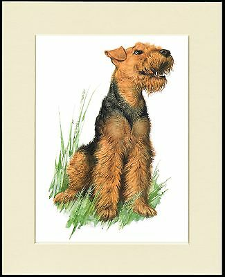 Welsh Terrier Seated Dog Charming Dog Print Mounted Ready To Frame
