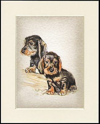 Dachshund Wire Haired Pups Charming Dog Print Mounted Ready To Frame
