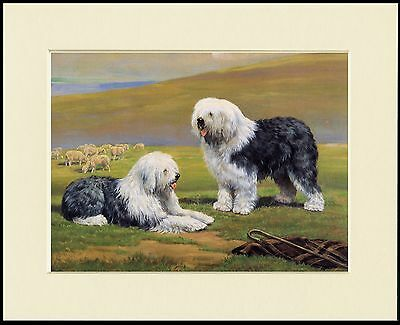 OLD ENGLISH SHEEPDOG PUPPIES AND HORSES LOVELY DOG PRINT MOUNTED READY TO FRAME
