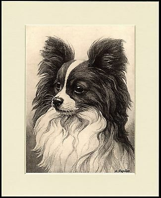 Papillon Charming Little Dog Head Study Print Mounted Ready To Frame