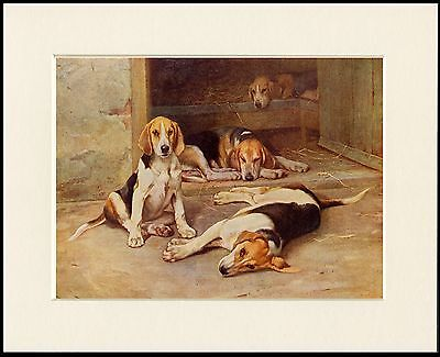 Foxhound Hounds At Rest Lovely Dog Print Mounted Ready To Frame