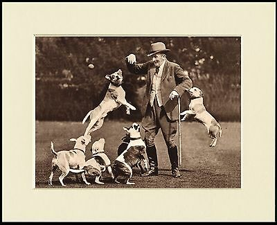 Tom Wall And His Staffordshire Bull Terrier Dogs Great Dog Print Ready To Frame