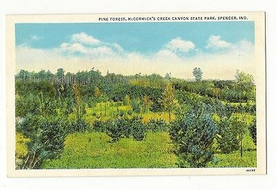 VINTAGE VIEW POSTCARD MCCORMICKS CREEK CANYON STATE PARK PINE FOREST SPENCER IN