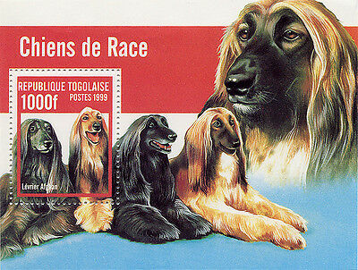 Afghan Hound Dog Lovely Stamp Mini Sheet with Five Dogs