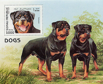 Rottweiler Dog Lovely Stamp Mini Sheet Two Dogs