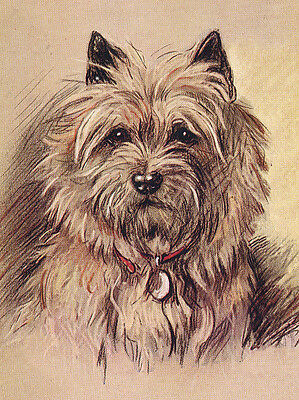 Cairn Terrier Charming Dog Greetings Note Card Lovely Head Study