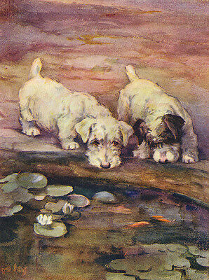 Sealyham Terrier Charming Dog Greetings Note Card Two Dogs At Fish Pond