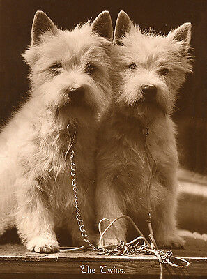 West Highland White Terrier Westie Dog Greetings Note Card Charming Twins