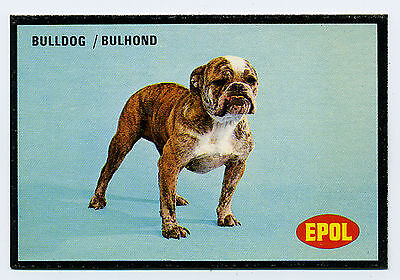 BULLDOG EPOL DOG SERIES SOUTH AFRICAN TRADE CARD FROM 1974