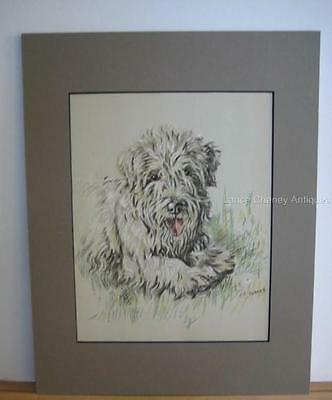 Sealyham Terrier by K.F. Barker Dog Art Color Bookplate 11x14 Taupe Mat c. 1938