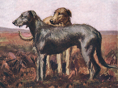 Irish Wolfhound Charming Dog Greetings Note Card Two Beautiful Standing Dogs