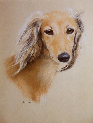 Saluki  Charming Dog Greetings Note Card, Beautiful Head Study