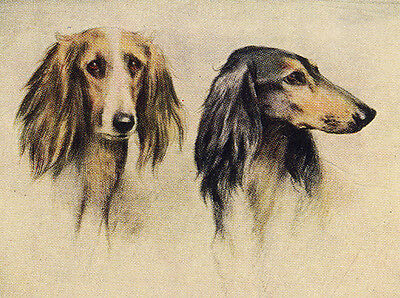 Saluki  Charming Dog Greetings Note Card, Two Beautiful Dogs Head Study