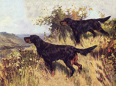 Gordon Setter Charming Dog Greetings Note Card Two Beautiful Dogs