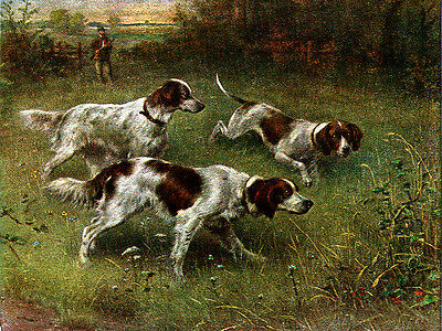 Irish Red And White Setter & Pointer Dog Greetings Note Card Three Dogs
