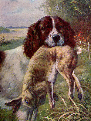 Irish Red And White Setter Dog Greetings Note Card Dog And Rabbit