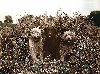 Bearded Collie And Flat Coated Retriever Dogs Lovely Dog Greetings Note Card