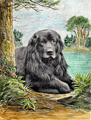 Newfoundland Dog By A Lake Lovely Greetings Note Card